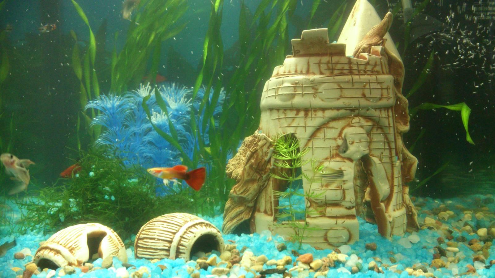 Анимационные обои для рабочего стола рыбки